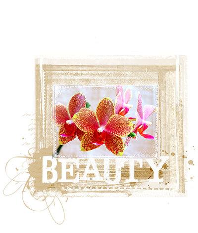 Beautyorchid00