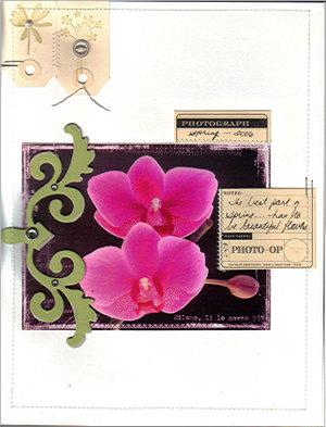 Orchid2halfplay